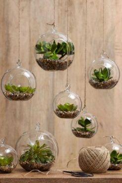 Plantes et Jardins