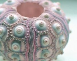 fineshellart.blogspot.com