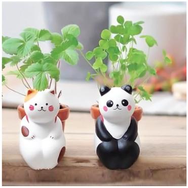Plante à faire pousser, chat ou panda, 14,50 euros l'un
