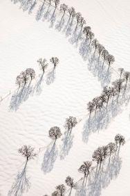 Luftbild von Baumreihen im Schnee