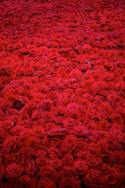 tournesol50-tumblr-com2