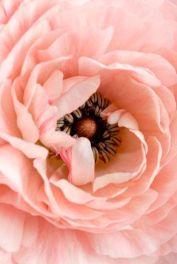 tournesol50-tumblr-com