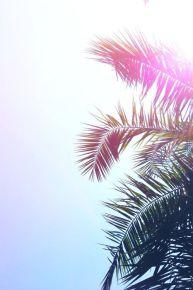 lejardindeclaire.blogs.marieclairemaison.com