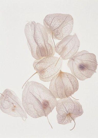 blanc-pale.tumblr.com2