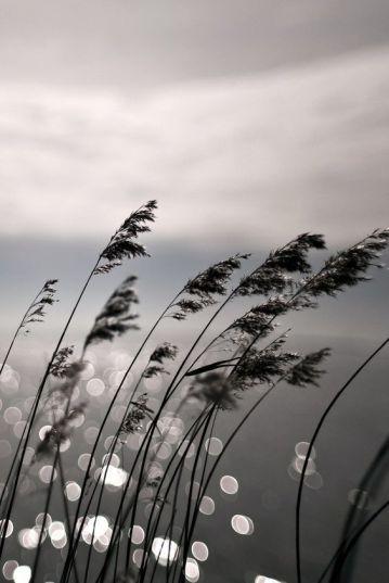 beaute-grace.tumblr.com