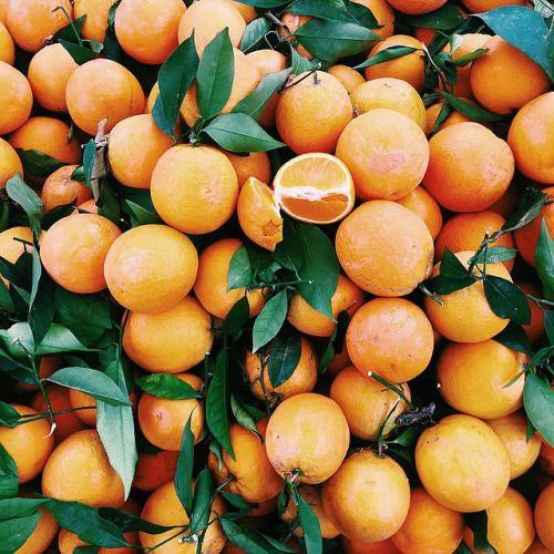 madeleines-au-citron.tumblr.com