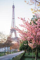 The Paris Photographer